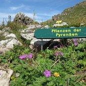 Der Bereich der Pyrenäenpflanzen