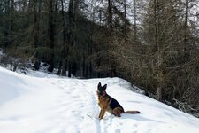 RS winterweg hund
